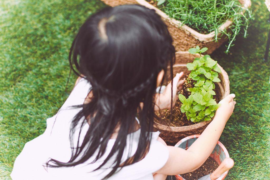 ハーブ菜園- Step 3