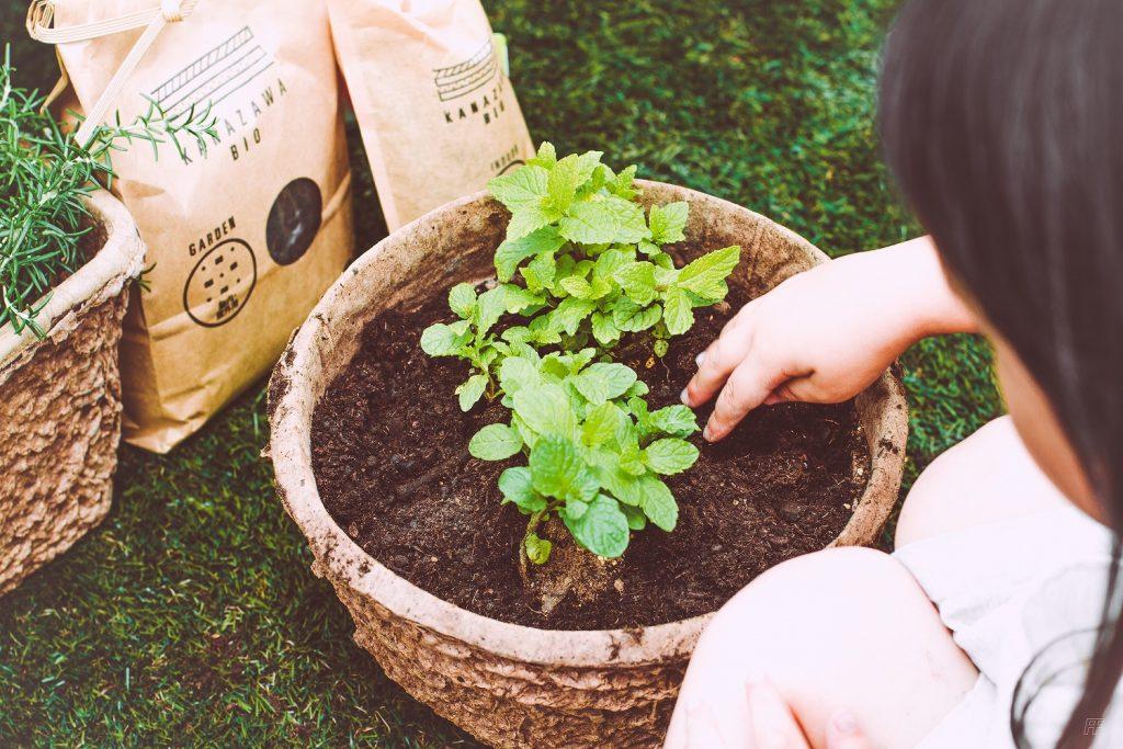 ハーブ菜園- Step 5